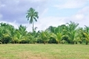 Plot for sale at Mazde Titha image 4
